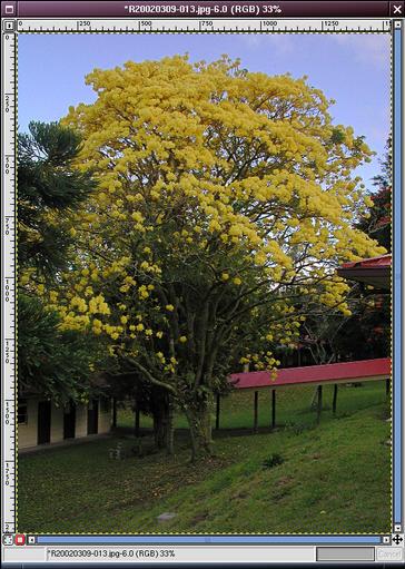 treewcmask.jpg